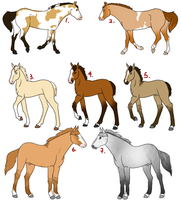 AIH Adopts 2 OPEN by EquusEquidae