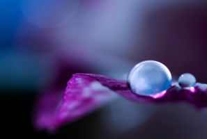 Delicate Moment by Jenni77
