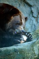 Grizzly Bear by AzureWindProductions