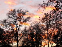 Sunset #1141 by Wileybill