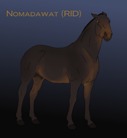 EEC Nomadawat by EmpireEquestrian
