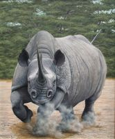 Charging Rhino. Oil on canvas. by painterman33