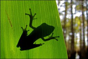 Tree Frog Silhouette by juddpatterson