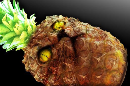 The Pineapple Cat, Time King by japochinezul