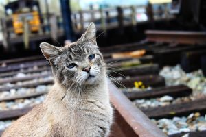 Cinders the Cat by S-H-Photography