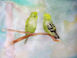budgies by imFragrance