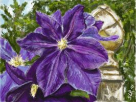 Clematis vine by Sla-r