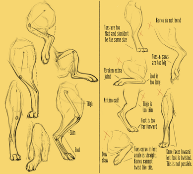 Realistic Canine Leg Tutorial by Anti-Dark-Heart