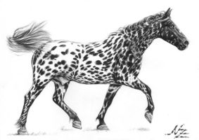 Tiger Dappled Horse by ArtsandDogs