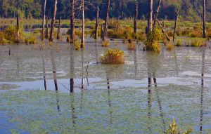 Lake or Swamp? by Tailgun2009