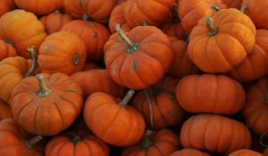 Punkins by Avelith