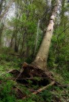 The Orton Effect Series: Tree by carbyville