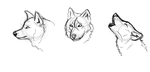 Wolf Practice Sketches by verlak