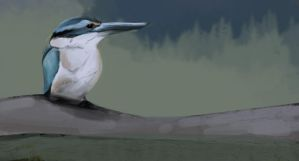 kingfisher study by duduOmag