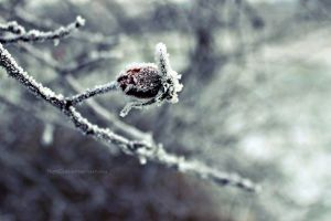 Winter nature [1] by NuteCake