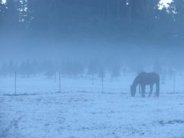 Horse in the Mist by elizabeth98932
