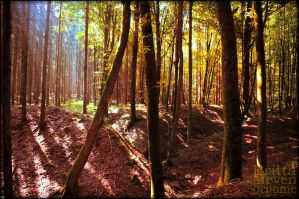 golden Forest by brijome