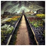 Greenhouse by Pajunen