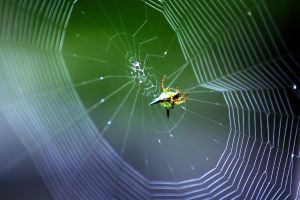 Spider Web 03 by josgoh