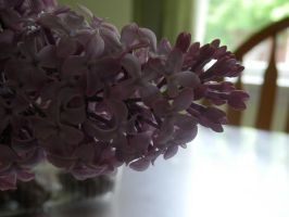 lilacs. by chickadee-studio