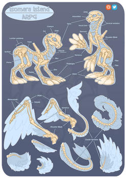 Isomara Skeleton Anatomy Guide by SlayersStronghold