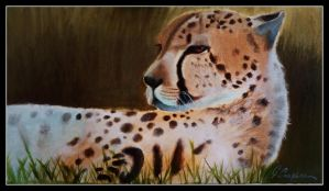 Cheetah-oil painting by gilly15