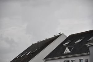 seaguls on the roof by ChrisBrowning