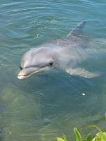 dolphin by stimulens