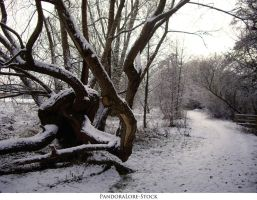Winter Wonderland 04 by AnitaJoy-Stock