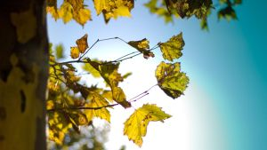 Autumn by Puttee
