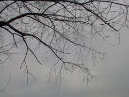 Bare tree by the lake by doodler