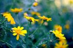 And it was all yellow by naor95
