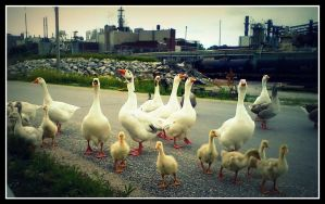 Geese and factories by DimmedFaith