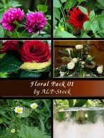 Floral Pack 01 by ALP-Stock