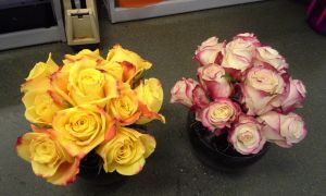 Pink and Flame Tipped Rose Bowls by pippierafrostlin
