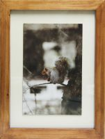 Framed-squirrelda by Joe-Lynn-Design