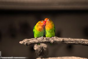 Love Birds by nico-eos1