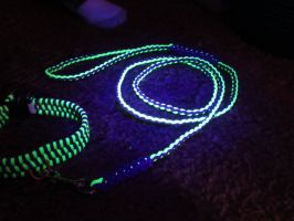 Purple and Green Collar  and leash (black light) by DenaliVonChrystshun