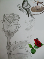 rose and butterfly by Niv-Ryo