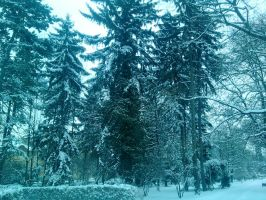 Snow ladnscape 2 by Dazed--Flame