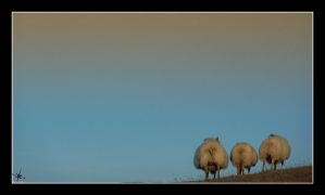 Three sheeps by cradeloso