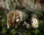 Lions 2015 by nudagimo