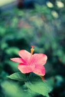 flower2 by fahadee