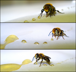 On The Honey Trail by Nestly