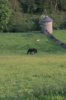 Horse and dove cote 2 by Sheiabah-Stock