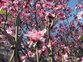 Spring has finally come 5 by csibecsont