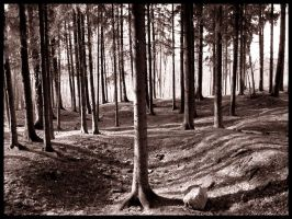a strange forest by scear