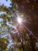 Sun in trees by BlueHecate