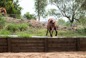 KM Brown leaping down ledge by Chunga-Stock