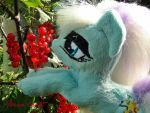 Countess Coloratura for SALE by FerraCraft